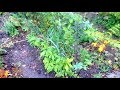 Permaculture Nursery: Detailed look at a production bed