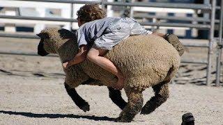 Niños divertidos y toddles jugando con animales de granja