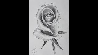 Урок №1. Графика. Рисуем розу простым карандашом
