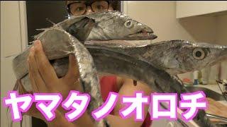 【刀のように鋭い!】太刀魚を捌いてカオスなお昼ご飯作ったww