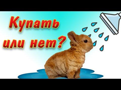 Можно ли купать декоративных кроликов дома?