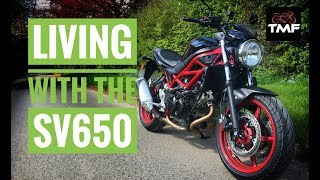 Living with the 2018 Suzuki SV650 - In Depth Review