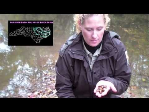 Recovering the Endangered Tar River Spinymussel