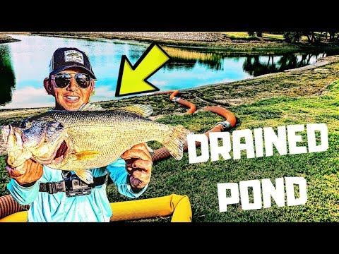Fishing DRAINED Ponds For BIG Bass (SURPRISING) Dallas, TX