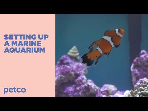 Saltwater Aquarium for Beginners