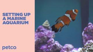 How to Setup a Fish Tank - Marine Saltwater (Petco)