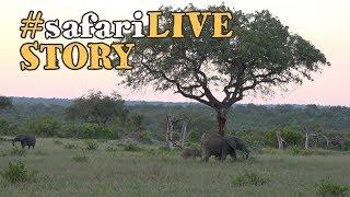 Iconic Trees of Djuma thumbnail