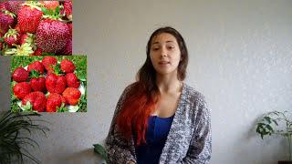 видео Сорт клубники Рубиновый Кулон - описание, фото, уход и отзывы | Ягодный сад, или прикладное садоводство в советах, вопросах и ответах