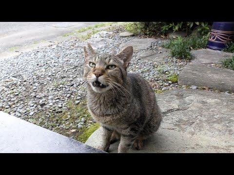 ノミ 野良猫