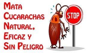 El Mejor Mata Cucarachas Natural, Eficaz y Sin Peligro