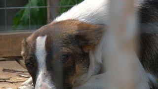 В Волгограде муниципальный «Горпитомник» заподозрили в убийстве «волонтерских» собак