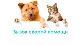Вызов скорой помощи для животных