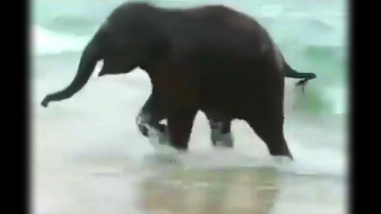 Octopus 39 S Garden By The Beatles Lyrics Plus Baby Elephant Youtube