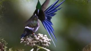 Paul Mauriat  Taka Takata Танец колибри