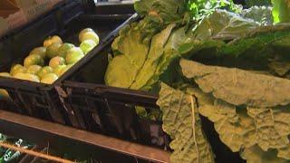 Court order sought for food, medical programs