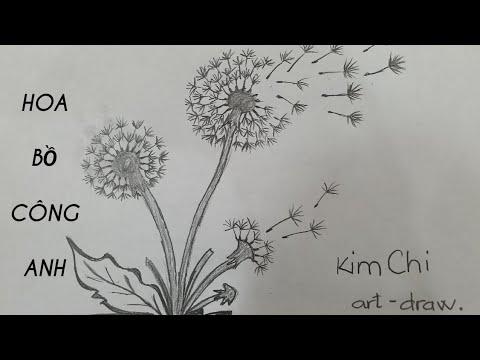 Cách Vẽ Bồ Công Anh đơn giản bằng bút chì – How to Draw a Dandelion with pencil l Kim Chi Art & Draw