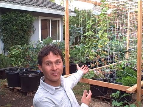 Backyard Organic Container Vegetable Garden Perfect for