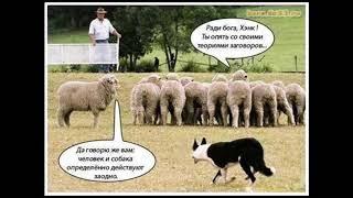 Пастух и собака всегда заодно