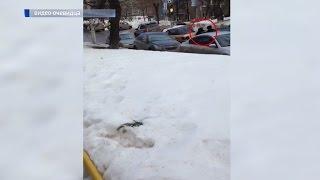 В Уфе на улице Достоевского сбили полицейского