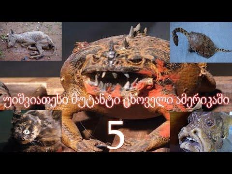 5 უიშვიათესი მუტანტი ცხოველი ამერიკაში (ვიდეო)