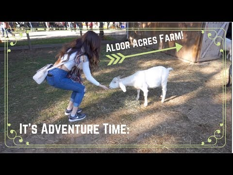 It's Adventure Time: Aldor Acres Farm!
