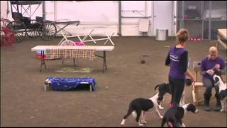 Service Dog Project: Training Orca's In The Arena, 29 Oct. 2014