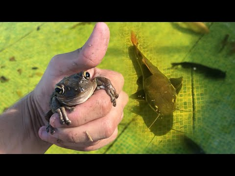 TREE FROG Gets EATEN By GIANT BASS!!