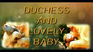 Happy news: DUCHESS is getting a new member. She has a healthy baby.