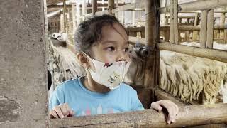 Drama Anak ! @Aruna Adreena  Beli Kambing Kurban