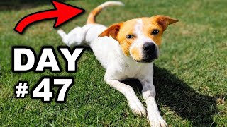 Filming my foster dog every day until first tail wag (Emotional)