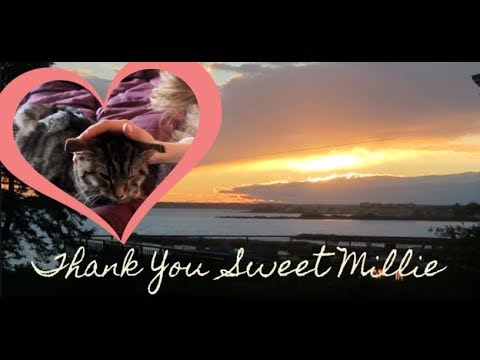 IT'S SAYING GOODBYE TO MILLIE