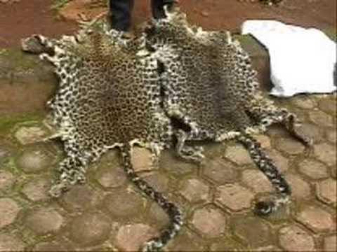 LAGA Leopard skins dealer arrest West Province Cameroon