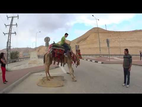 On the way to Jericho we rode a camel. Another successful trip of  Bein Harim Tourism Services