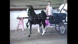 1991 Syracuse International Amateur Harness Pony Championship