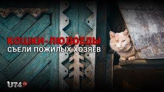 U74.RU: В Миассе кошки-людоеды съели пожилых хозяев (18+)