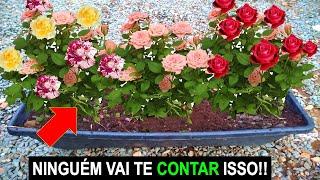 Nunca Mais Compre Rosas – Olha só Isso