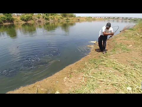 Amazing Fishing Video || Incredible Big Catfish