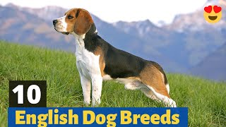 10 Most Popular English Dog Breeds in the World