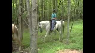 Tenn Walkers Spotted Saddle horses Palomino Gray Blackwhite 4sale down hill