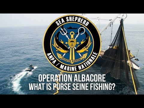 What Is Purse Seine Fishing?