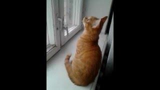 Бакс подрос. Рыжий котенок