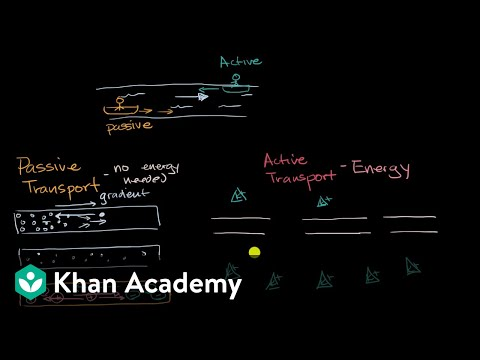 Introduction to passive and active transport