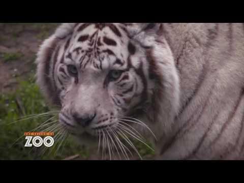 Une Saison Au Zoo - S7 Ep01