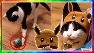MELA + CZAPKA POKEMON EEVEE Cat Cap Hat Neko no kaburimono Gacha Gatcha Capsule Toy