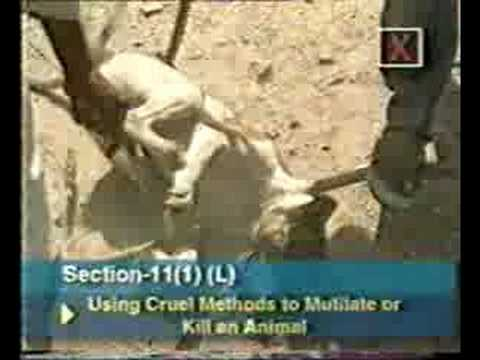 INDIAN ANIMAL LAWS - SECTION - 11 OF PCA ACT, 1960