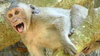 Janet Cries Seizure on Tree request Milk | Jane B.I.T.E Weaning Janet Mother Jane | Sounds Monkey