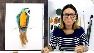 Экспресс-урок по акварельному скетчингу «Попугай»
