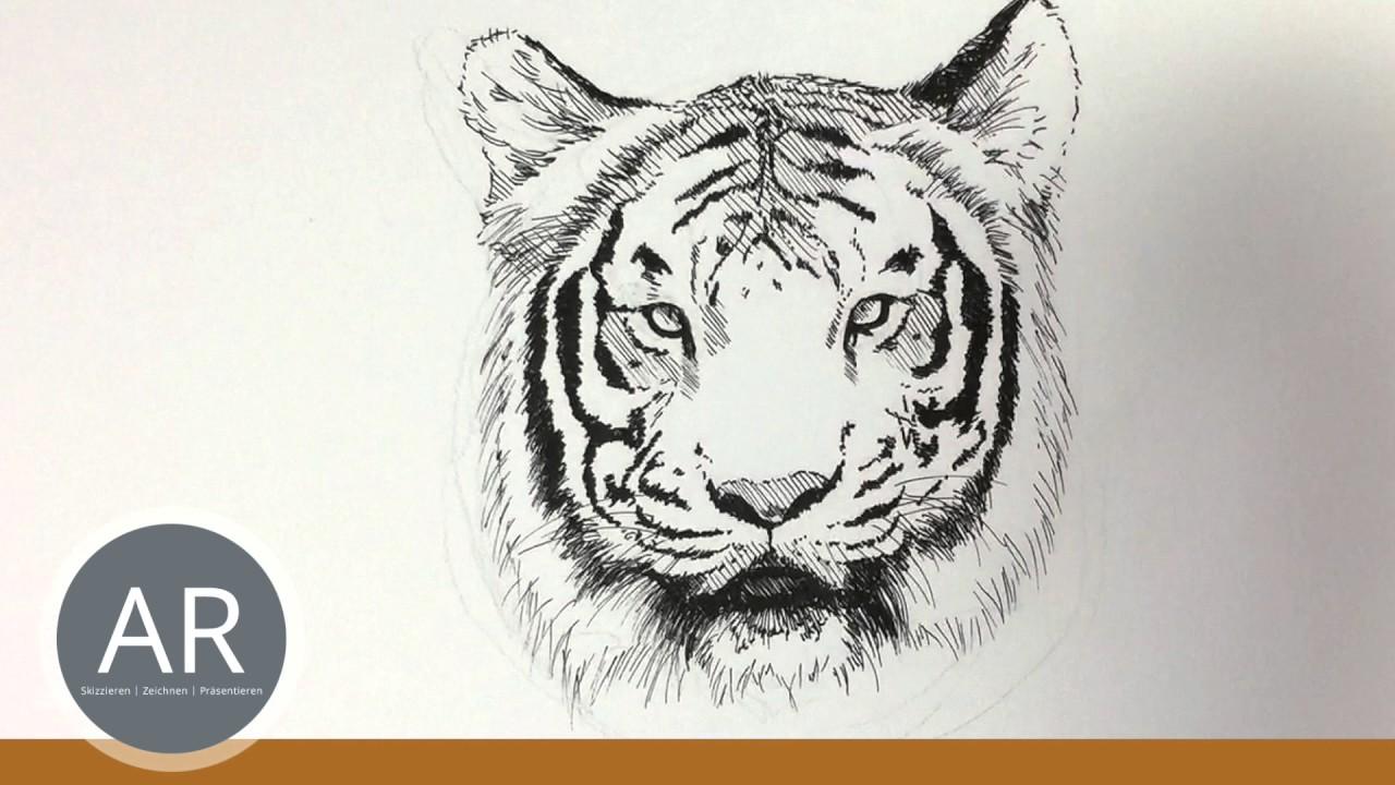 tier illustrationen tiere zeichnen lernen tiger zeichnen. Black Bedroom Furniture Sets. Home Design Ideas
