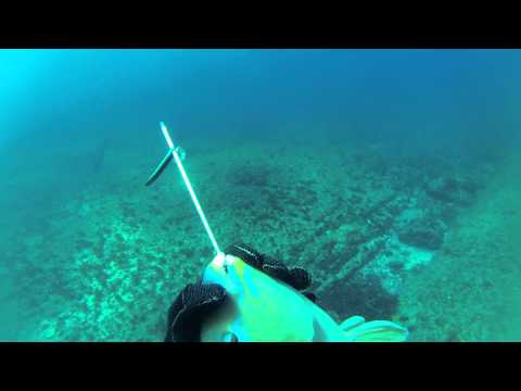 Spearfishing South East Queensland 2
