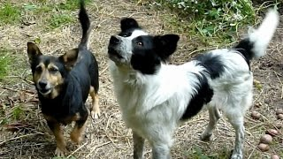 two homeless dogs become best friends after being rescued by howl of a dog